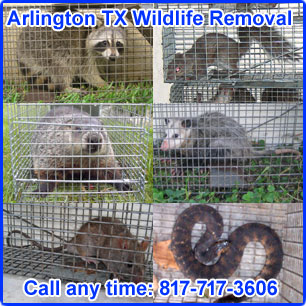 ... including all of Tarrant County and the towns of Bedford, Benbrook, Blue Mound, Burleson, Colleyville, Edgecliff Village, Euless, Everman, Flower Mound, ...